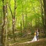 Postboda entre el verd dels arbres i el color mostassa
